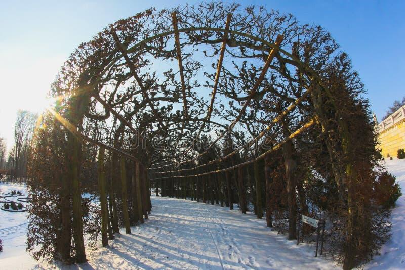 Śnieżna ścieżka przez zima lasu obrazy royalty free
