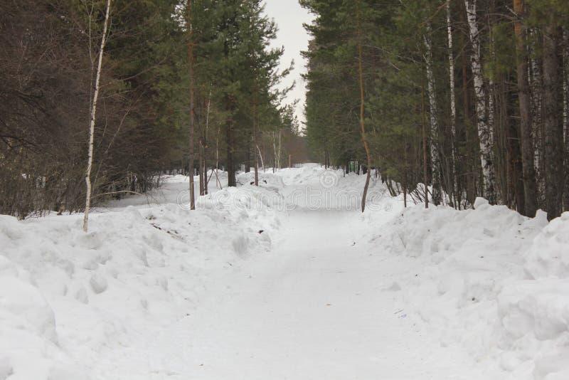 Śnieżna ścieżka w zima lesie 30539 fotografia royalty free