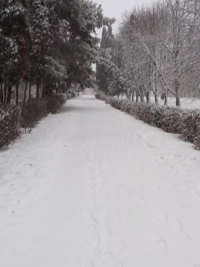 Śnieżna aleja fotografia royalty free