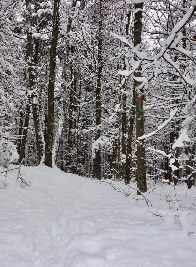 Śnieżna burza w pustkowie lesie, drzewa na skłonie fotografia stock