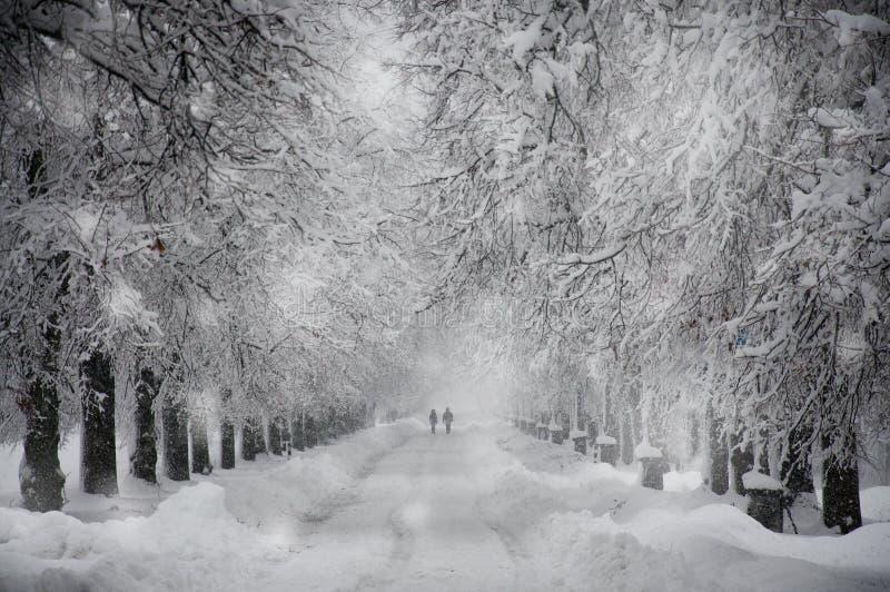 Śnieżna droga zdjęcie royalty free