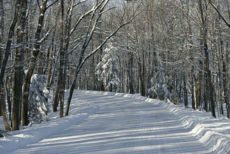 Śnieżna droga iść do ziobro stanu Halnego parka zdjęcie royalty free