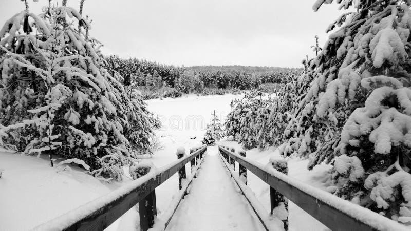 Śnieżna droga przemian istna zima fotografia royalty free