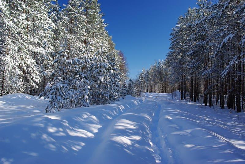 Śnieżna droga w lesie fotografia stock