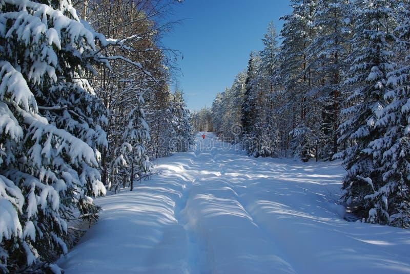 Śnieżna droga w lesie obraz royalty free