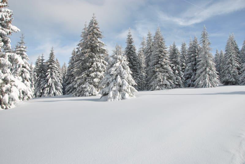 Śnieżna halna łąka zdjęcia royalty free
