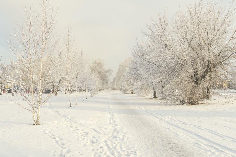 Śnieżna lasowa aleja fotografia royalty free