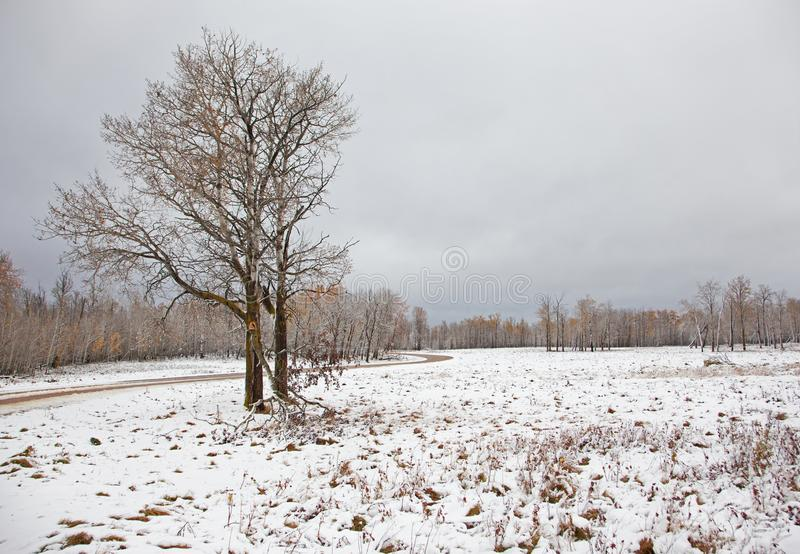 śnieżna sceny zima obrazy stock