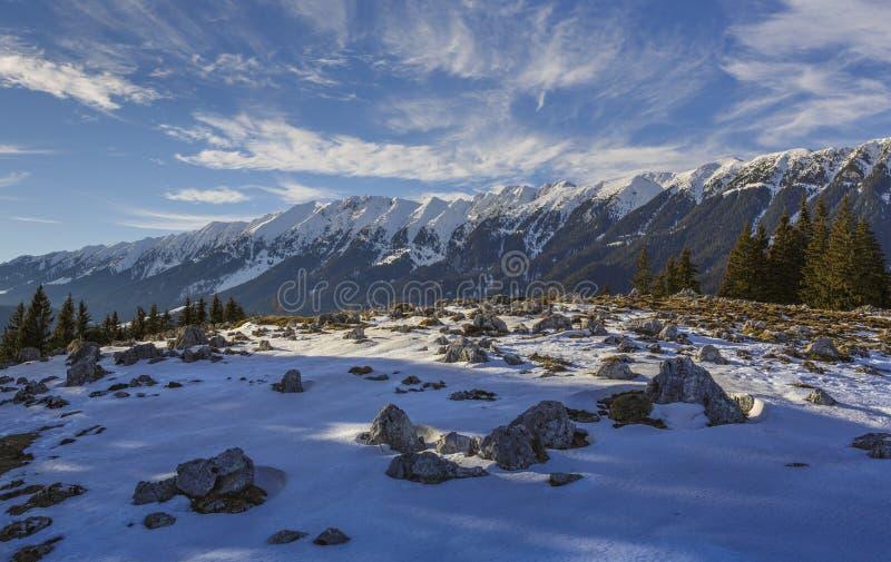 Śnieżna Zanoaga łąka, Piatra Craiului góry, Rumunia obraz stock