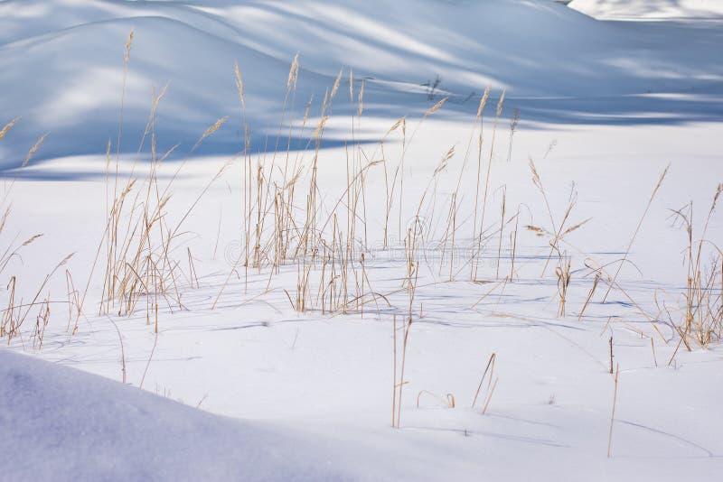 Śnieżna zima dryfy trzcina marznąca obraz stock