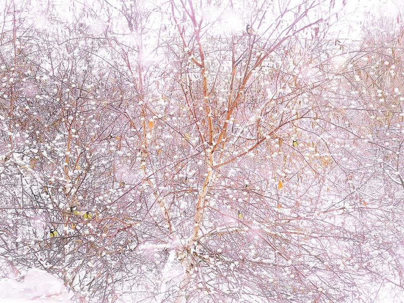 """Śnieżna zima na zewnątrz okno Ptaki na drzewie Śnieg spada â """"– 2 obrazy royalty free"""