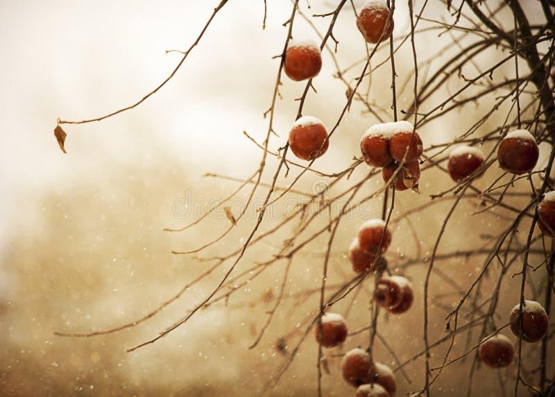 Śnieżna zimy owoc obrazy stock