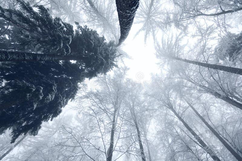 Śnieżnego zima sezonu lasowi drzewa zdjęcie royalty free