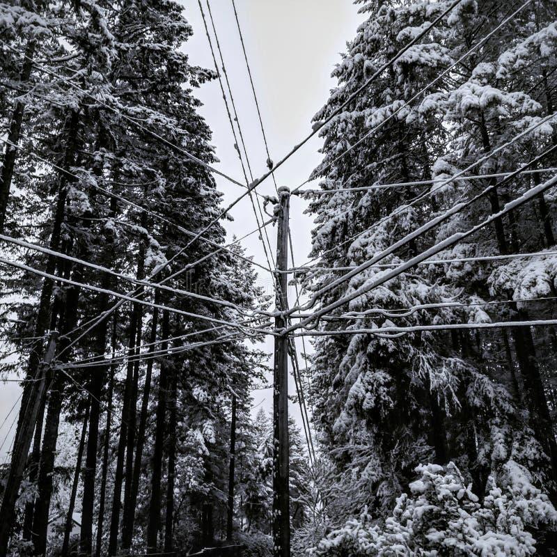Śnieżni druty w zimie zdjęcia stock