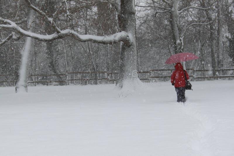 śnieżni drzewa obraz royalty free