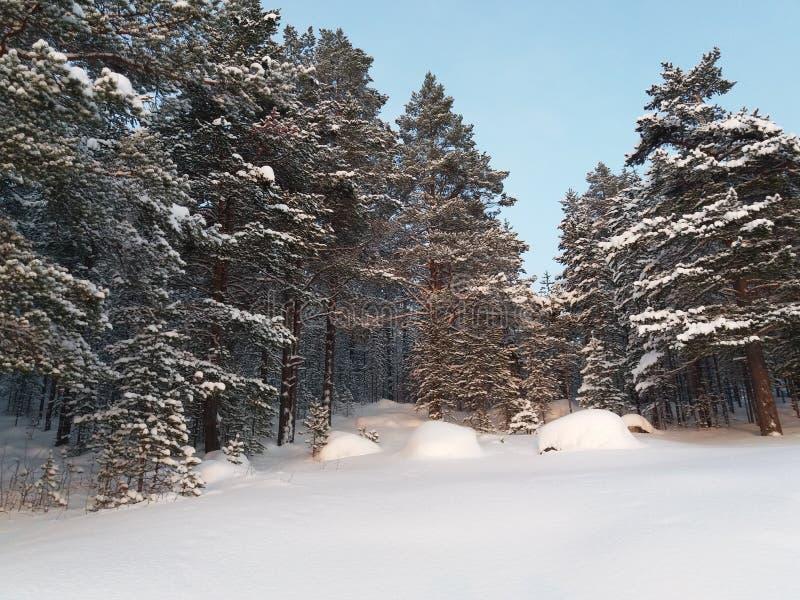 Śnieżni drzewa i niebieskie niebo w zimie fotografia stock