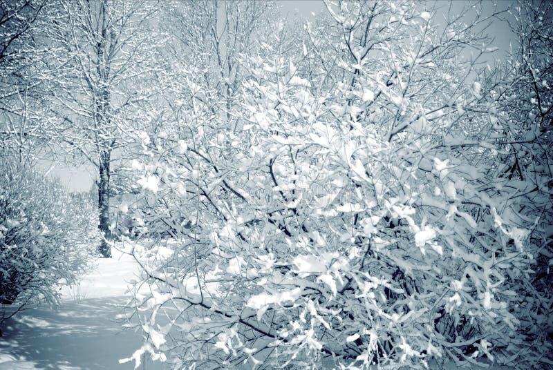 Śnieżni drzewa w miasto parku na pogodnym lekkim dniu obrazy stock