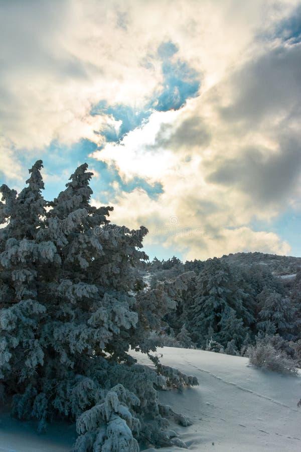 śnieżni gór drzewa obraz stock