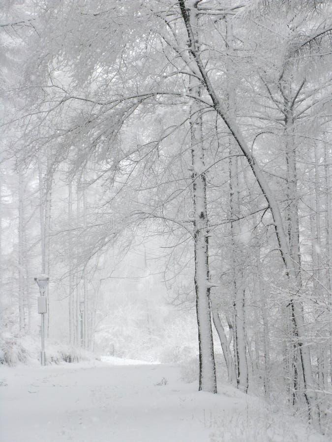 śnieżni lasu objętego zdjęcia royalty free