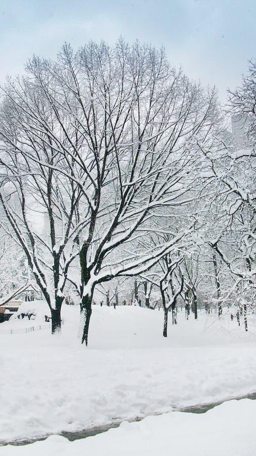Śnieżni nakrętek drzewa w central park Nowy Jork zdjęcie royalty free