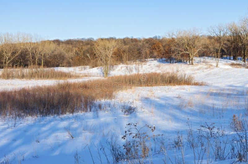 Śnieżni Preryjni wzgórza i lasy Batalistyczna zatoczka obrazy stock