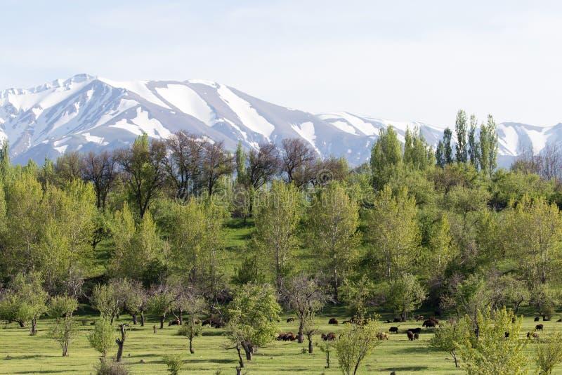 Śnieżni szczyty Tien shanu góry kazakhstan obraz royalty free