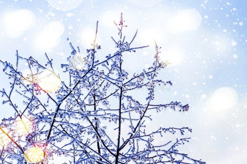 Śnieżni Treetops przeciw niebieskiego nieba i bokeh światłom fotografia stock