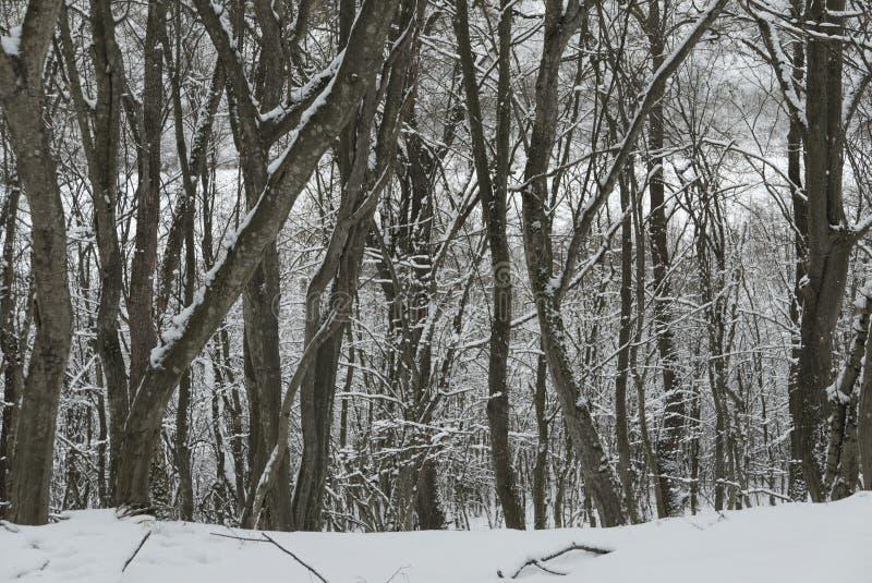 Śnieżni wzory obraz stock