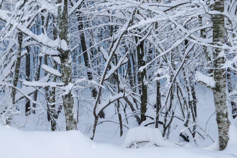Śnieżni wzory obraz royalty free