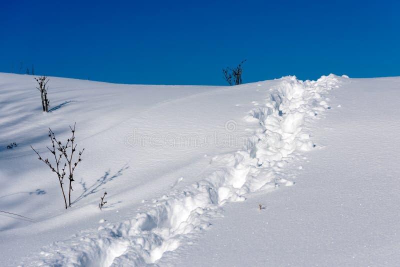 Śnieżny ślad obraz stock