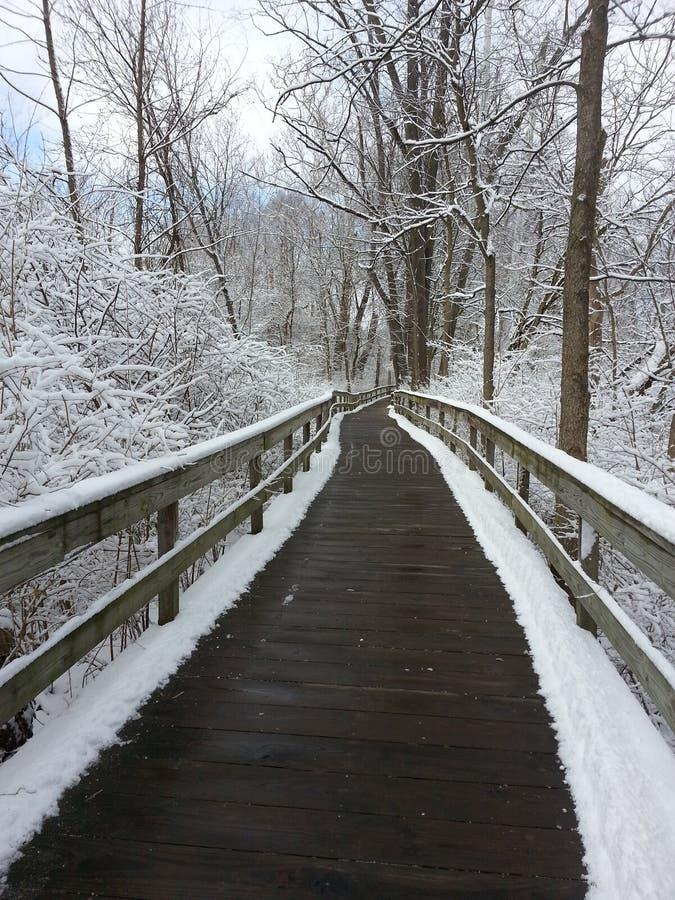 Śnieżny ślad w drewnach zdjęcia stock