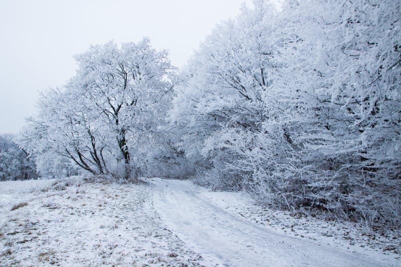 Śnieżny Czarodziejski właśnie przechodzący zdjęcia royalty free