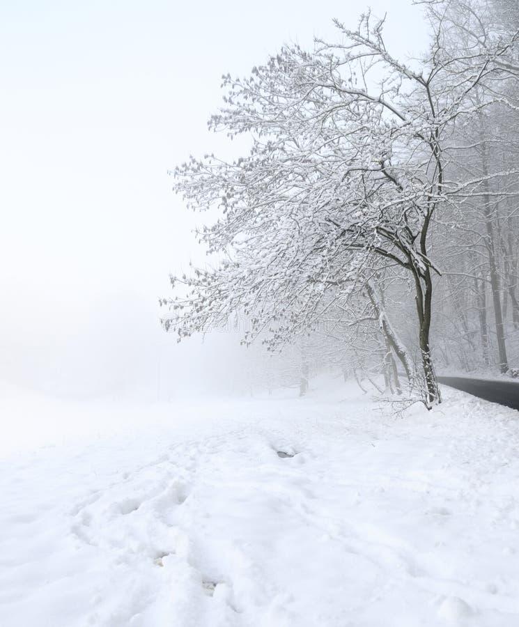 śnieżny drogi drzewo fotografia stock