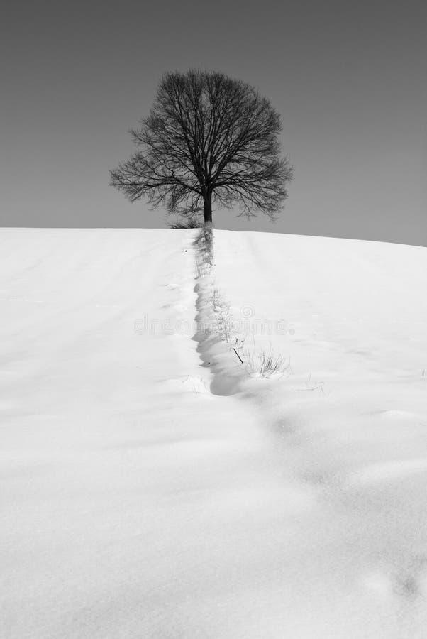 śnieżny drzewo zdjęcia stock