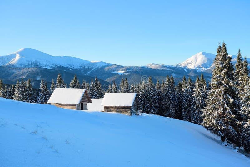 Śnieżny drzewo stojak na gazonie Wysokie góry zakrywają z śniegiem Stary buda stojak w dolinach zimna dzień zima obrazy stock