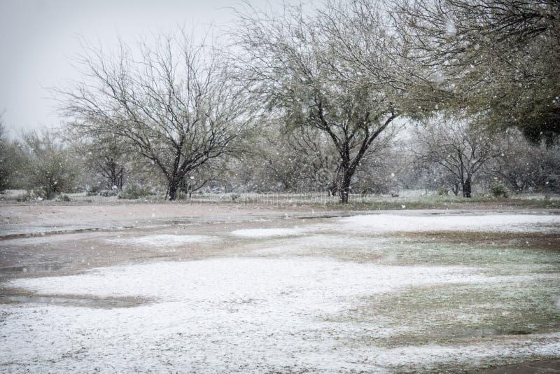 Śnieżny dzień w parku z mesquite drzewami w Arizona fotografia stock