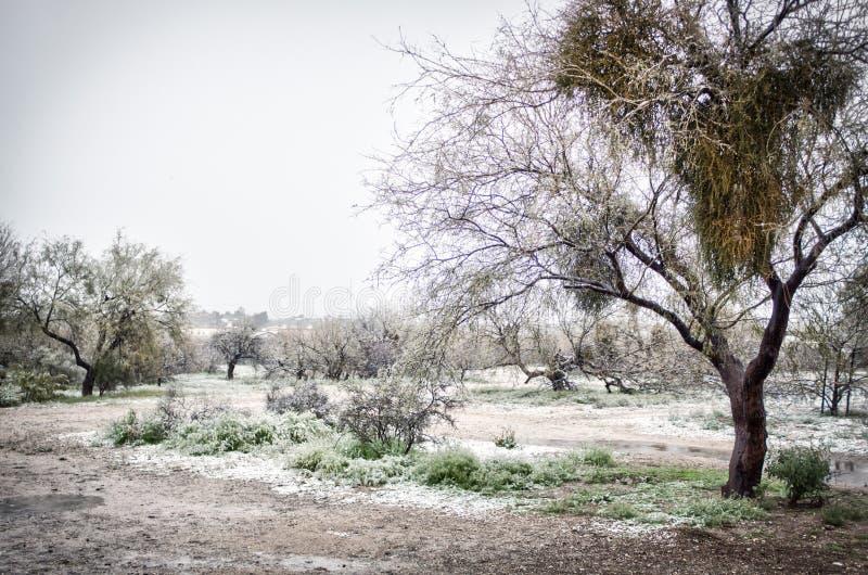 Śnieżny dzień w parku z mesquite drzewami w Arizona obrazy stock