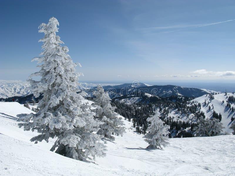śnieżny góry drzewo zdjęcie stock