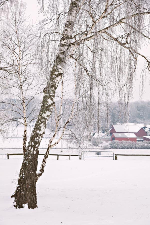 Śnieżny gospodarstwo rolne krajobraz zdjęcie royalty free