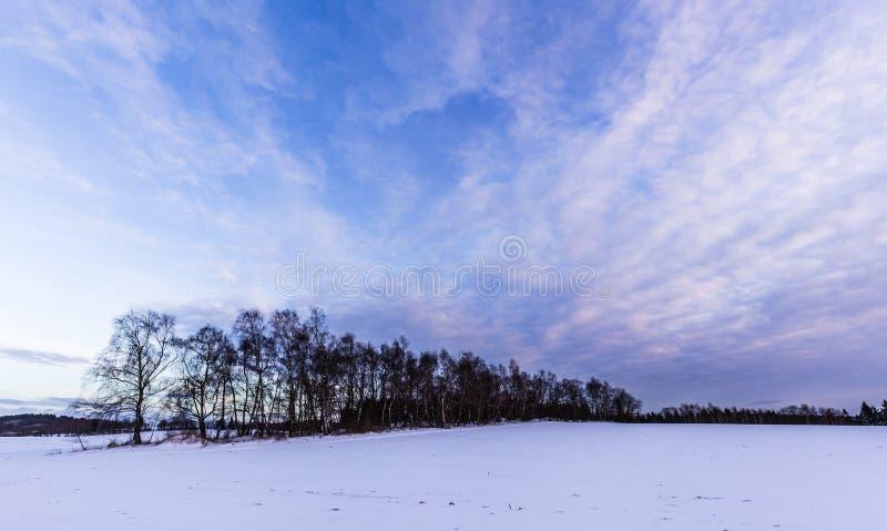 Śnieżny krajobraz i aleje zdjęcia royalty free