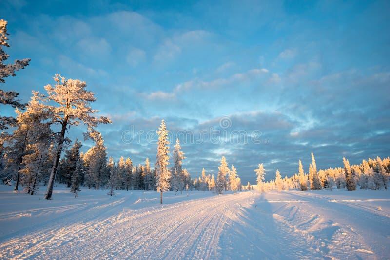 Śnieżny krajobraz, marznący drzewa w zimie w Saariselka, Lapland Finlandia zdjęcie royalty free