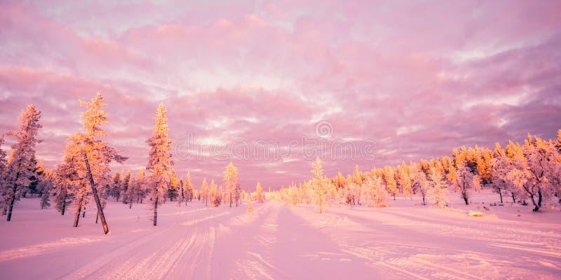 Śnieżny krajobraz, różowy zmierzchu światło, marznący drzewa w zimie w Saariselka, Lapland Finlandia obrazy stock