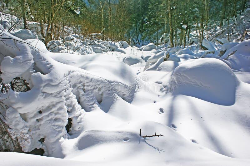 Śnieżny las. zdjęcie stock