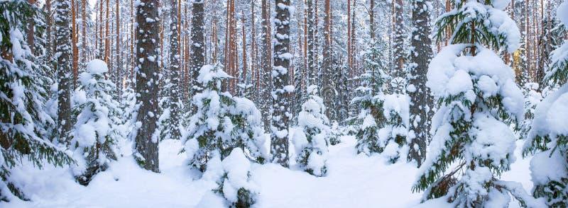 Śnieżny las fotografia royalty free