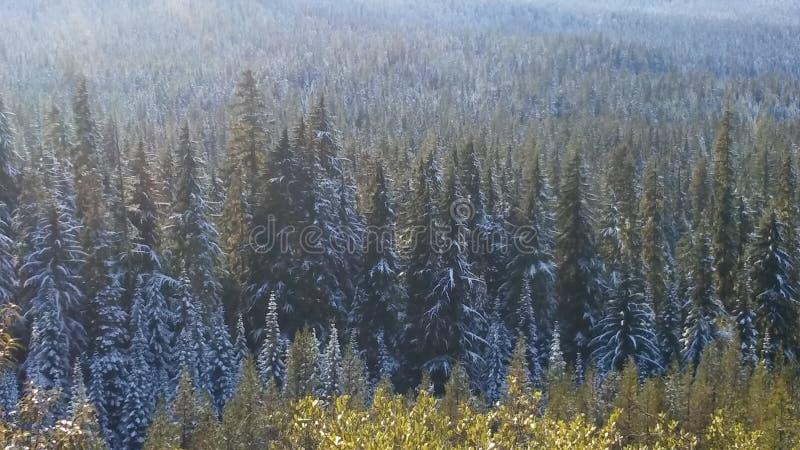 Śnieżny las zdjęcie stock