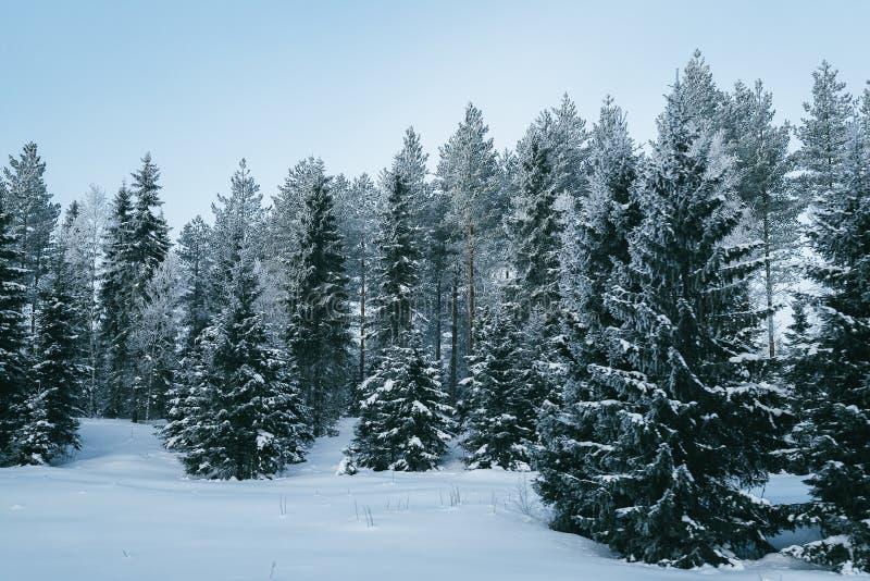 Śnieżny las w wsi zimie Rovaniemi w Lapland fotografia stock