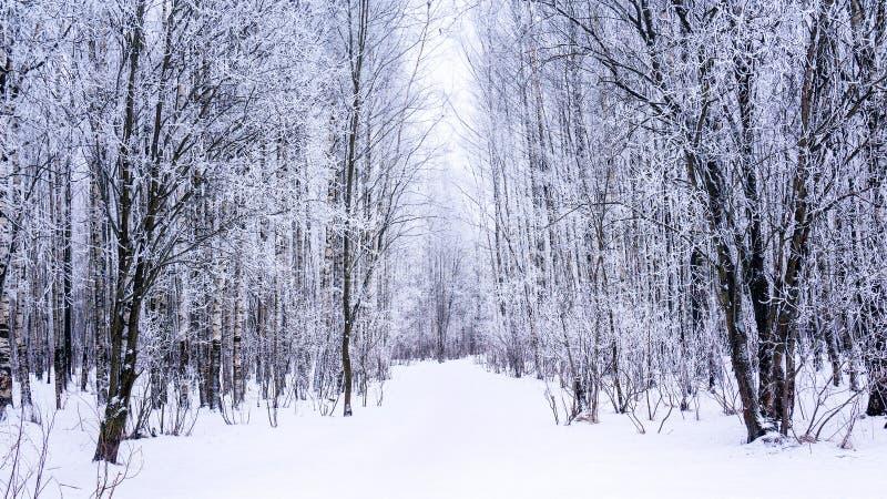 Śnieżny lasowy ślad z zamarzniętymi drzewami zakrywał hoarfrost zdjęcia stock