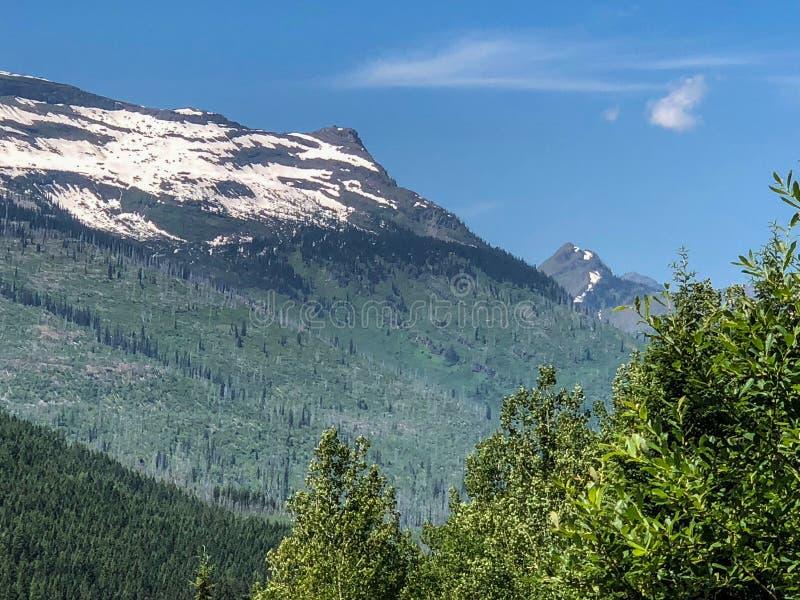 Śnieżny lodowiec i zieleni drzewa przy parkiem narodowym obrazy royalty free