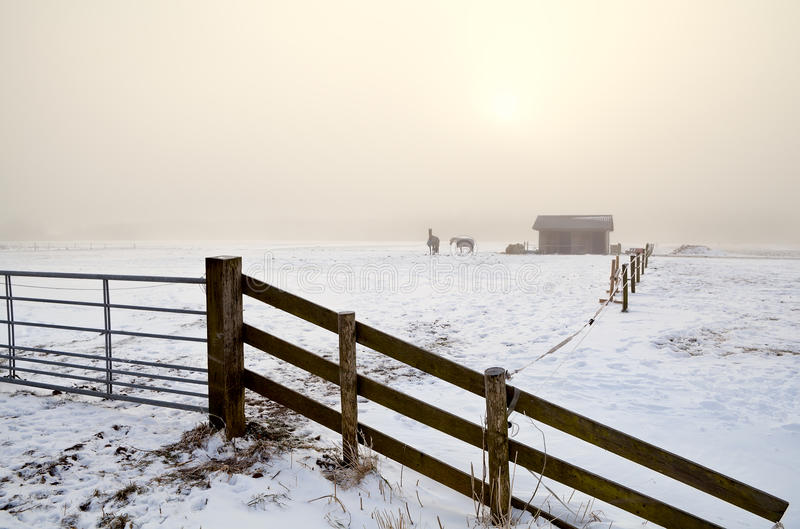 Śnieżny paśnik w zwartej mgle obraz royalty free