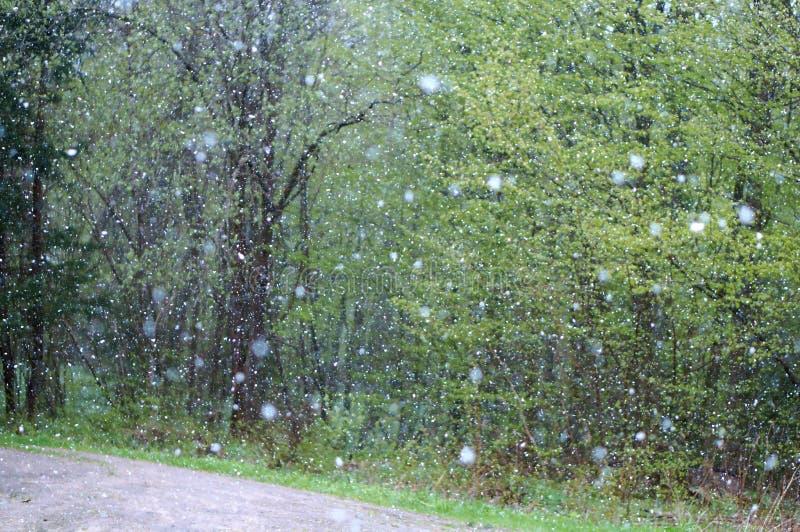 Śnieżny, pada, wietrzeje, bad, śnieg, zima, burza, grad obraz stock